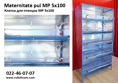 Maternitate pui MP 5x100